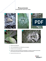 f_paraleyrodes.pdf