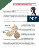 06.1. Sistema Respiratorio.docx