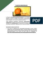 MARTES- PLANTAS MEDICINALES.docx