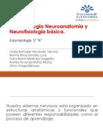Neuroanatomia y Neurofisiologia Basica