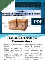 El Sistema Integumentario.pptx