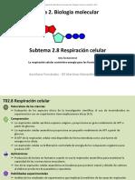 2_8_Respiración Celular - Modificado