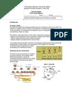 Ciclo celular Mitosis.docx