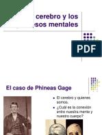 Cerebro y Procesos Mentales (1)