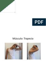 Guia de Flexibilidad Material de Apoyo