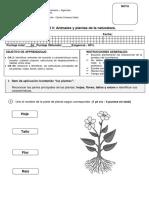 Prueba unidad 3 animales y plantas.pdf