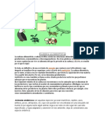 CADENA ALIMENTICIA.doc