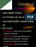 KLH DIARE- e.coli.pptx