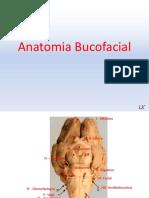 anatomiabucofacial-151222144642