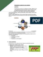 Mejoramiento Genetico en Cerdos