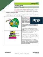 Bio Notes 14.9.4 Productivity Pyramid 2