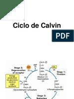 8.3CICLODECALVIN_24480 (1).pdf