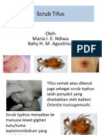 24. Scrub Tifus.ppt