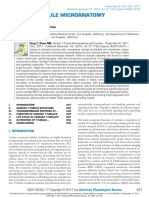 2017 PHYS REV Túbulo T Cardíaco Microanatomia e Função