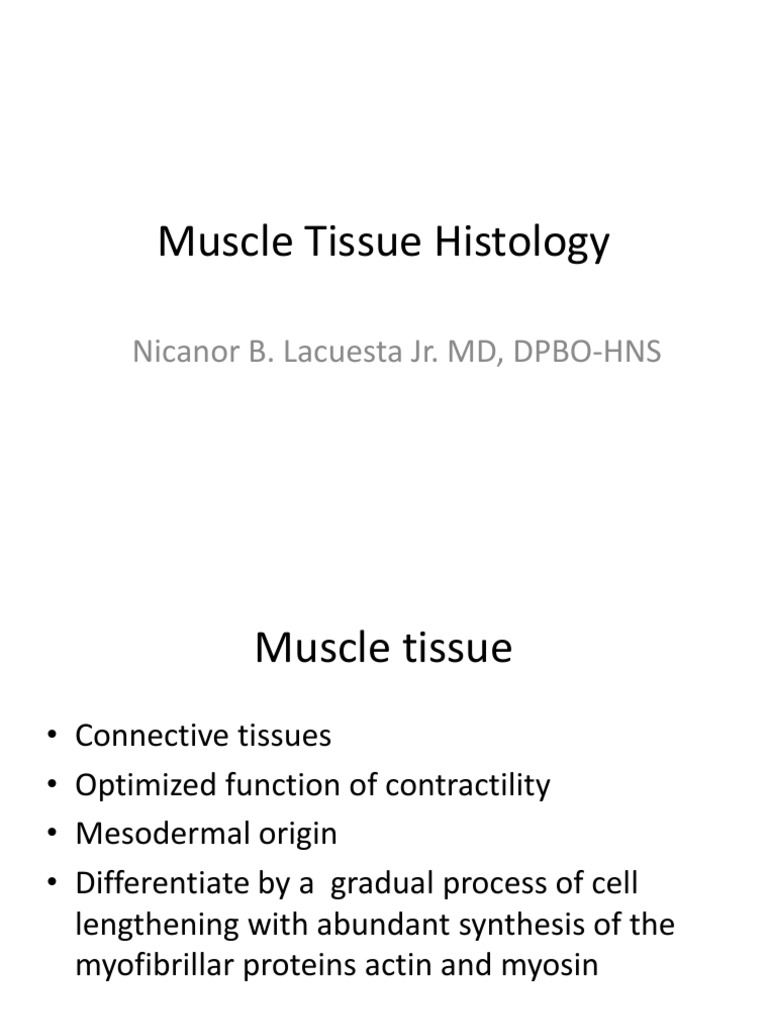 B Muscle Tissue Histology Muscle Contraction Myocyte