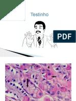 Monitoria histologia - TGI - 3 bim.pptx