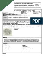 Estudio de Los Cromosmas Humanos en Células en Interfase