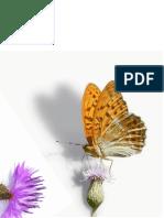 butterfly-112754_1280.pdf