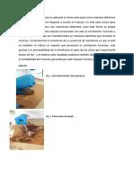 Conclusión Fisiologia Practica 3