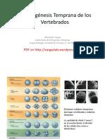 Embriologia en vertebrados