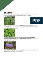 Plantas Medicinales y Su Uso Ilustrados
