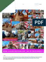 Kelinci Hias Populer Di Indonesia Kelinci Hias Bandung Dijual 081910500571