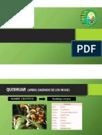 Expo Botanica PDF