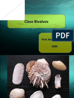 Clase Bivalvos