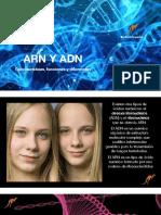 Funciones del ADN y ARN