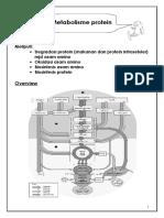 Metabolisme+protein.pdf