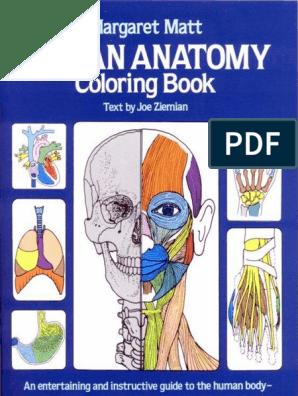 Human Anatomy - Coloring Book.pdf