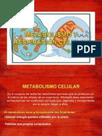 Metabolismo y Respiración Celular. Núcleo