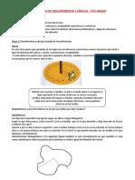 Secuencia Circunferencia y Circulo 5to