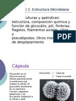 7aCapsula_26738.pdf