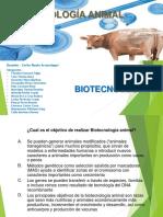 Biotec Animal