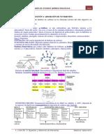 Guía 6-Digestión y Absorción de Nutrientes Resuelta