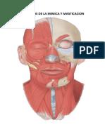 Musculos de La Mimica y Masticacion Fisico - Trabajo