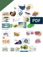 Componentes de La Celula Vegetal.