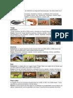 Fauna de Las 8 Regiones