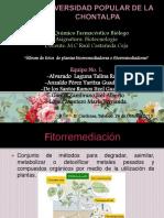 catalogodeplantasfitorremediadoras-151027060700-lva1-app6891.pdf