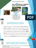 """""""ESTUDIO BOTÁNICO, CARACTERISTICAS Y VARIEDADES COMERCIALES DEL CULTIVO DE ARANDANOS"""""""