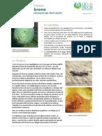 FCP Cydia Funebrana ES Rev01