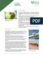 FCP Cydia Pomonella ES Rev01