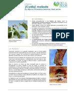 FCP Grapholita Molesta ES Rev01