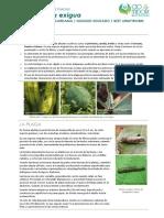 FCP Spodoptera Exigua ES Rev00