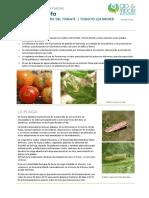 FCP_Tuta_absoluta_ES_Rev02.pdf
