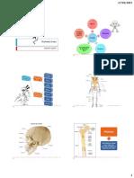 Sistema óseo(1)