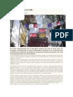 Apicultura Urbana en Chile
