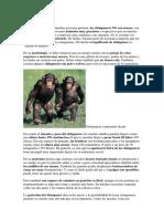 Chimp Ance