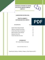 54330257-Practica-No-4-Excitabilidad-Del-Nervio-i-Fisiologia.docx